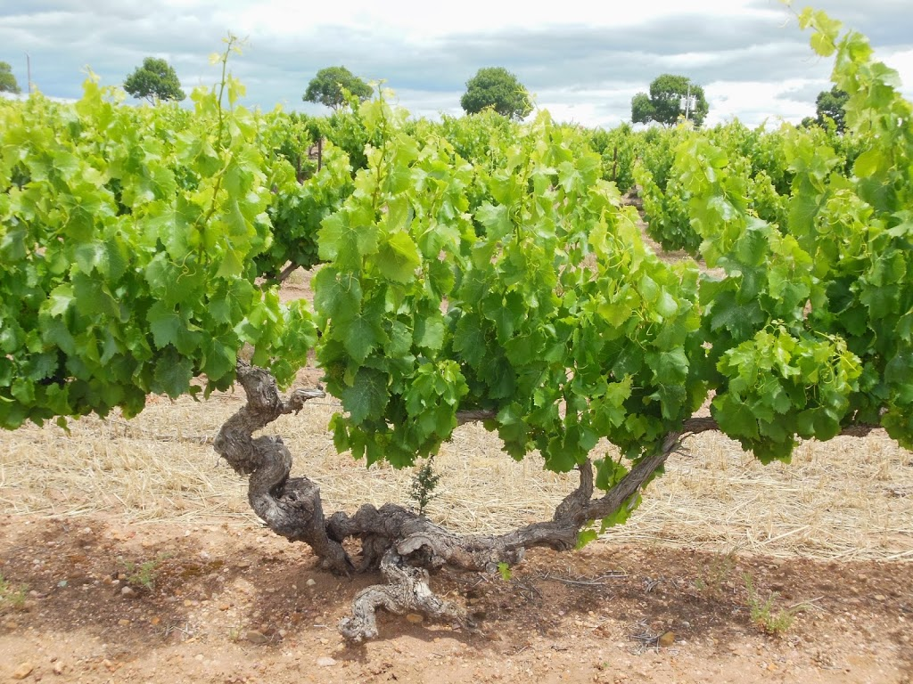 Cheers!   Part 1: McLaren Vale and the South Australia wine country